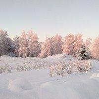 Зима продолжается :: Наталья ***