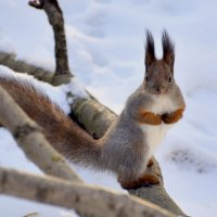 """А мы тут орешками балуемся..."" :: Anatoley Lunov"