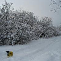 Свежий снег :: Anna Ivanova