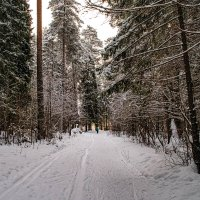 зимний парк. :: petyxov петухов
