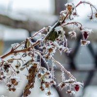 Зимний урожай :: Андрей Щетинин