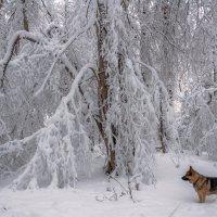 Молчаливая созерцательность :: Наталья Димова