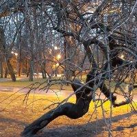 Вечером в парке :: Наталья Герасимова