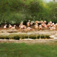 Фламинго :: Лара Leila