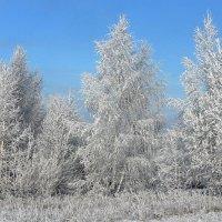 Зимний пейзаж. :: оля san-alondra