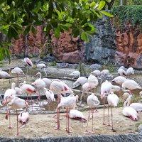 Фламинго, но не розовый... :: Alex