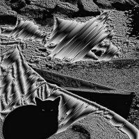 Морской котик Сорренто :: олег свирский