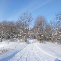 И манит лыжная погода в феврале.. :: Андрей Заломленков