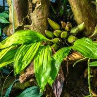 бананы которые растут в Париже :: Георгий А