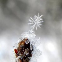 Снежинки. :: Вера Литвинова