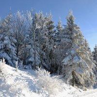 Зимние прогулки в горах :: tamara *****