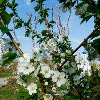 Скоро Весна! :: Зоя Чария