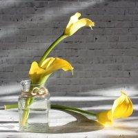 Жёлтые калы. :: Нина Сироткина