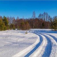 Подмосковная Зима 2020 :: Андрей Дворников