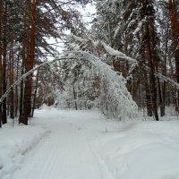 Снежные врата. :: Мила Бовкун