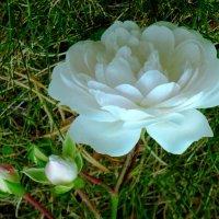 Сентябрьский цветочек :: Raduzka (Надежда Веркина)