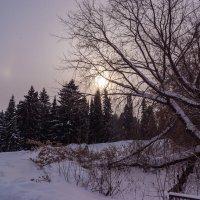 Утром :: Валерий Симонов