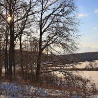 Солнечный февраль. :: Инна Щелокова