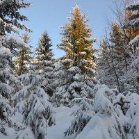 В зимнем наряде :: tamara *****