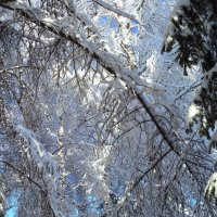 Последние морозы (зимняя сказка) :: - Ivolga