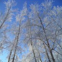 Последние морозы (2) :: - Ivolga