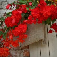 Летние городские цветочки :: Татьянка *
