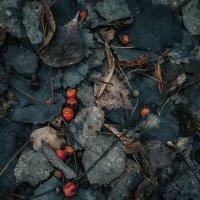 Осенний покров :: Ангелина Бонд