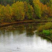 Осенний поворот реки. :: Галина Полина