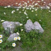 Городские цветы :: Андрей Хлопонин