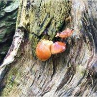 Зимние грибки. :: Валерия Комова
