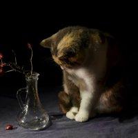 Натюрморт с кошкой :: Александр Довгий