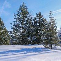 Чистый снег. Башкирия :: Надежда Середа