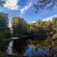 Лесное озеро :: оксана