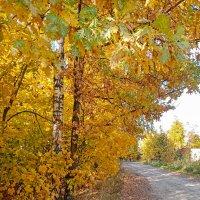 золотая осень :: оксана