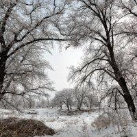 Зима :: Igor Baranov