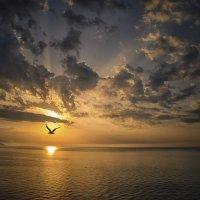 Не в высоте полета счастье, а в самом полете… :: Александр Бойко