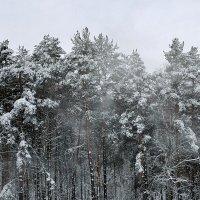 ветер снег сдувает :: Валентина. .