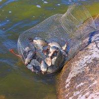 Танабайская рыба ) :: Штрек Надежда