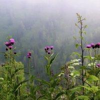Травы таёжные :: Сергей Чиняев