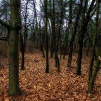 Без снежный лес :: Евгений Кирюхин