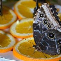Бабочки завтракают :: Ростислав