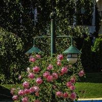 Ароматные фонари :: Alexander Andronik
