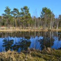 На озере :: Larisa Simonenkova