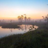 Заря на болоте :: Фёдор. Лашков