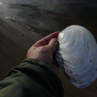 Первый раз за 70 лет нашёл перловицу такого размера в воде Москва-реки! :: Александр Сергеевич Антонов