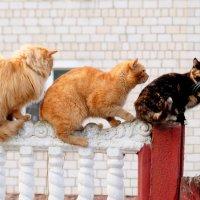 кошачьи истории 4 :: Александр Прокудин