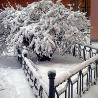 """Снежный """"фонтан"""" :: Ольга И"""