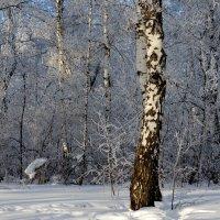 В зимней роще :: Татьяна Лютаева