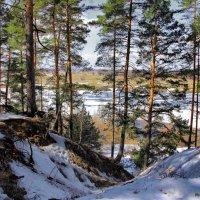 Уже не в силах зимним жить февраль.. :: Лесо-Вед (Баранов)