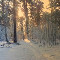 Утро в лесу. :: Мила Бовкун